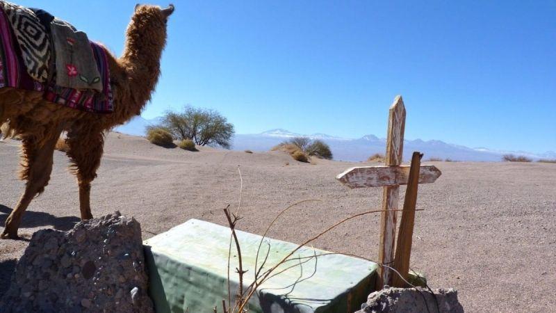 Atacama Desert. Photo by Shelley Seale