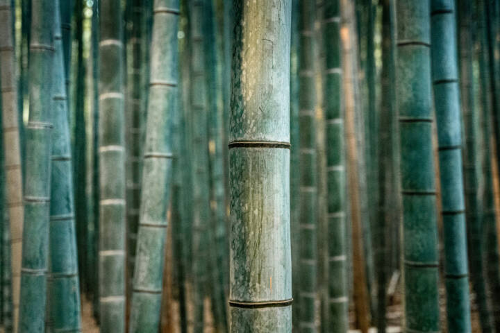 Peta and Ben: Building Sustainable Bamboo Housing