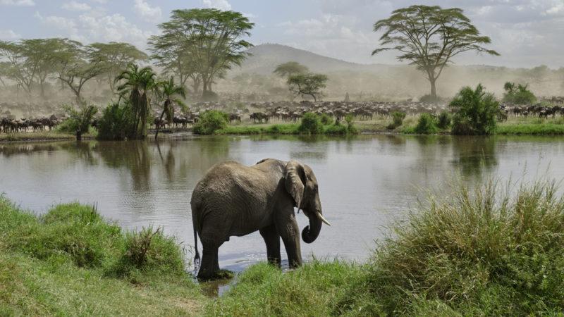 Moshi, Tanzania Serengeti National Park