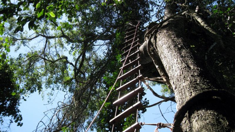 Canopy Tour Iguazu National Park
