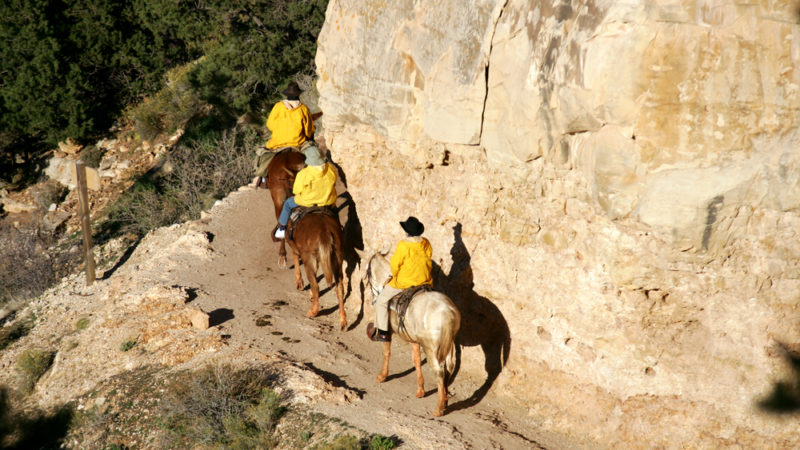 Mule Trips - Grand Canyon National Park