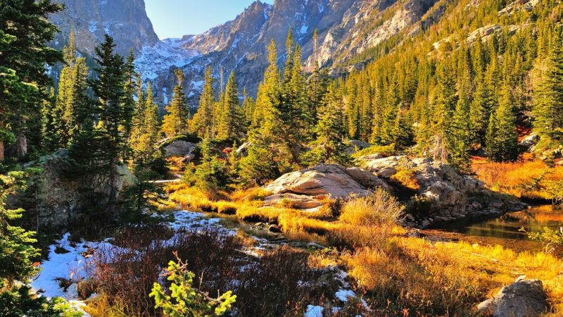 Rocky Mountain National Park Plans and Trees
