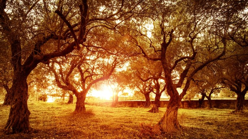 olive park, cyprus