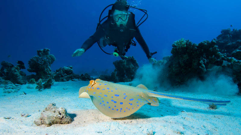 scuba with sting ray