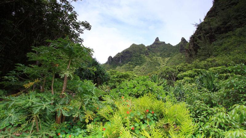 Limahuli Garden