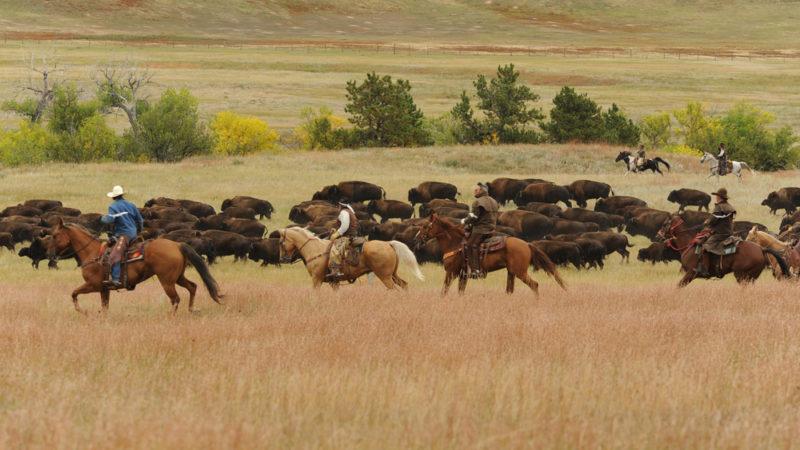 Custer State Park South Dakota