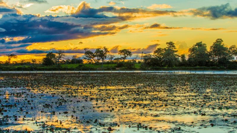 Pantanal Wetlands