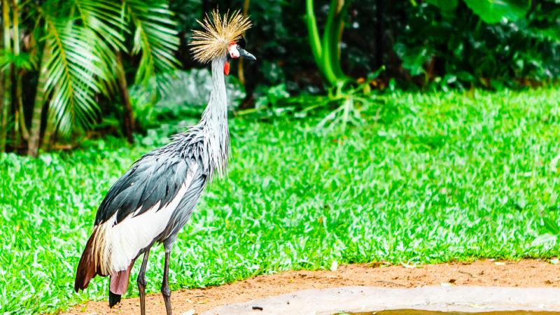 Parque das Aves Brazil