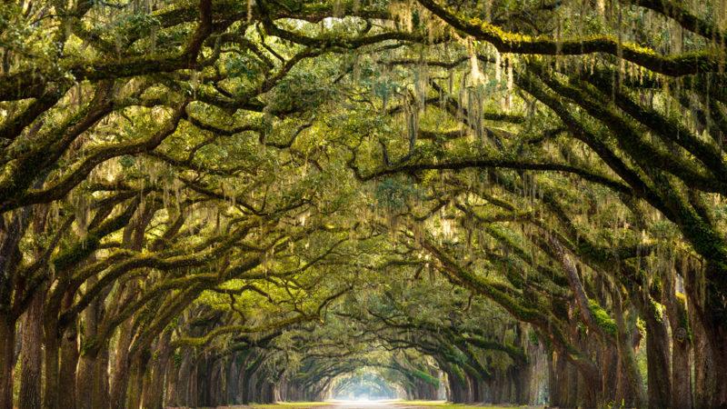 Skidaway Island State Park Savannah