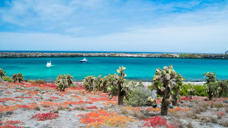Galapagos South Plaza island
