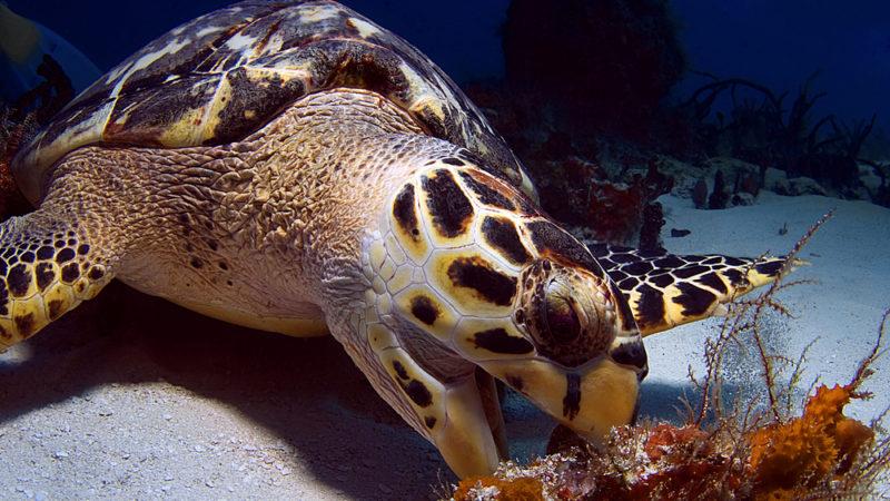 Sea Turtle Virginia Beach