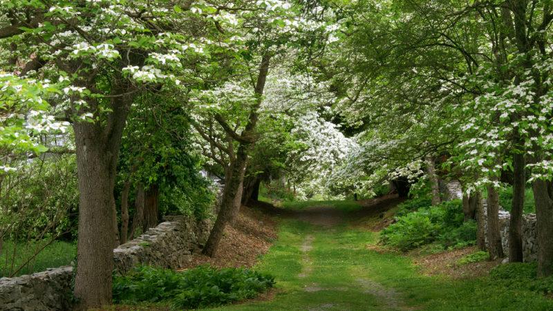 Tidewater Arboretum Virginia