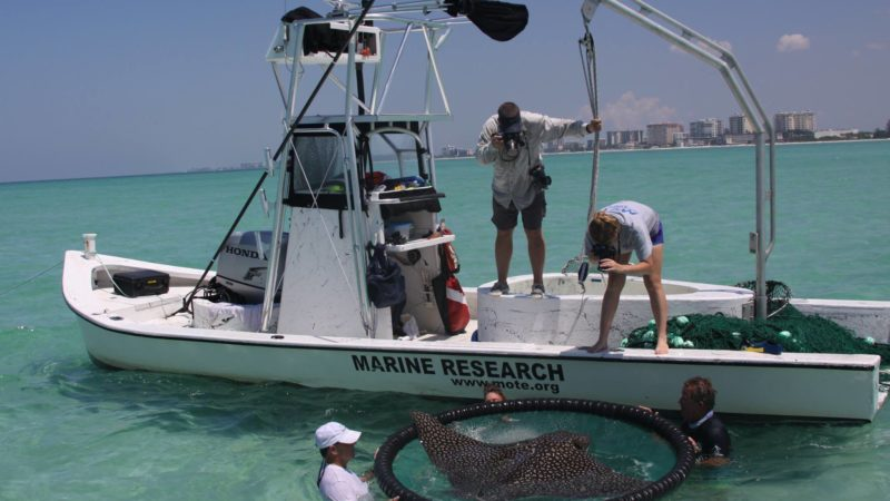 Photo by: Mote Marine Laboratory