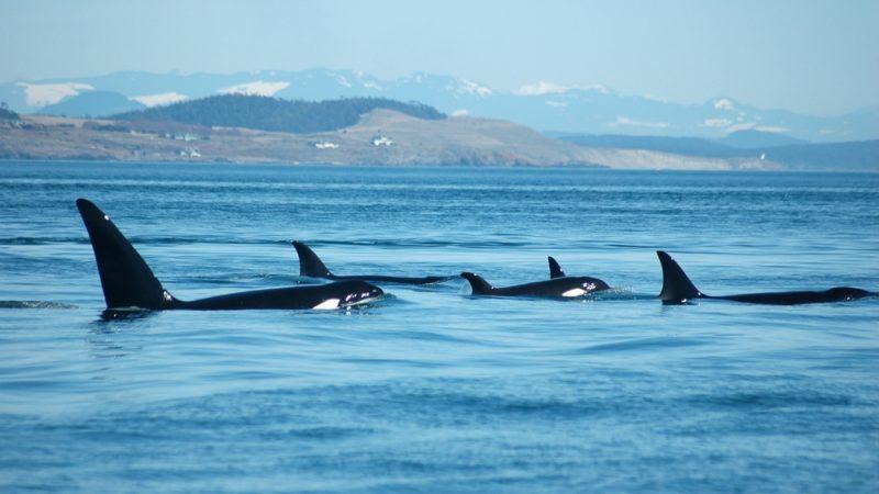 Orcas Washington