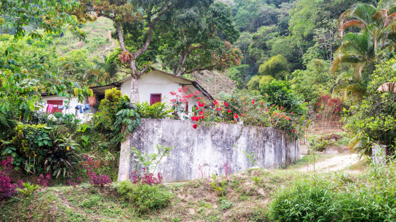 Coffee Farm Colombia