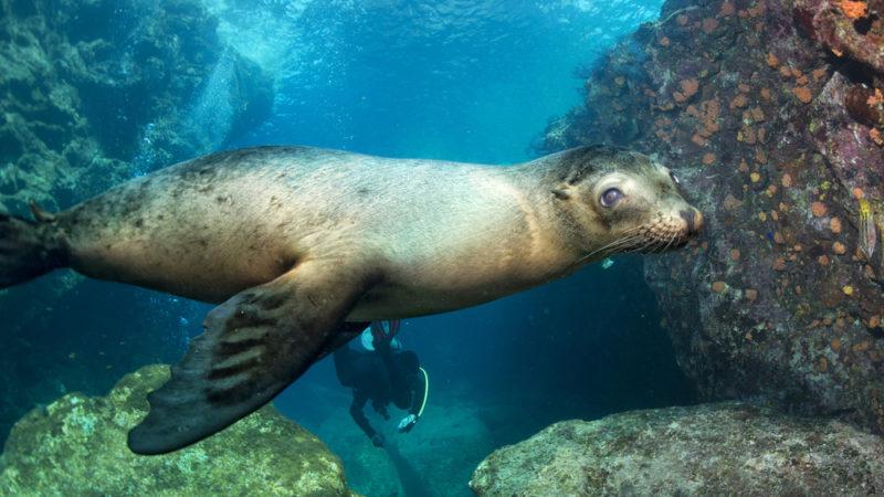 Diving Galapgos Islands