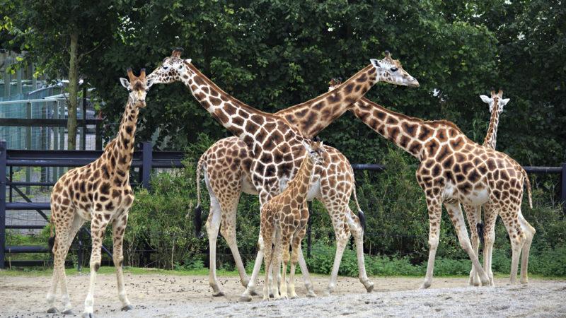 Ireland Zoo