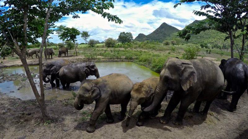 Photo by: Elephants World