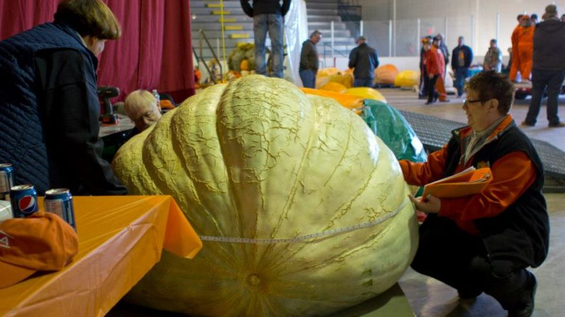 Photo by: Smoky Lake Great White North Pumpkin Fair