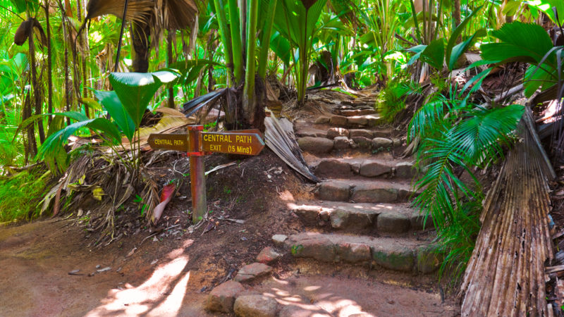Vallée de Mai Nature Reserve