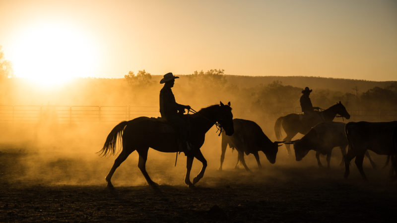 mustering outback