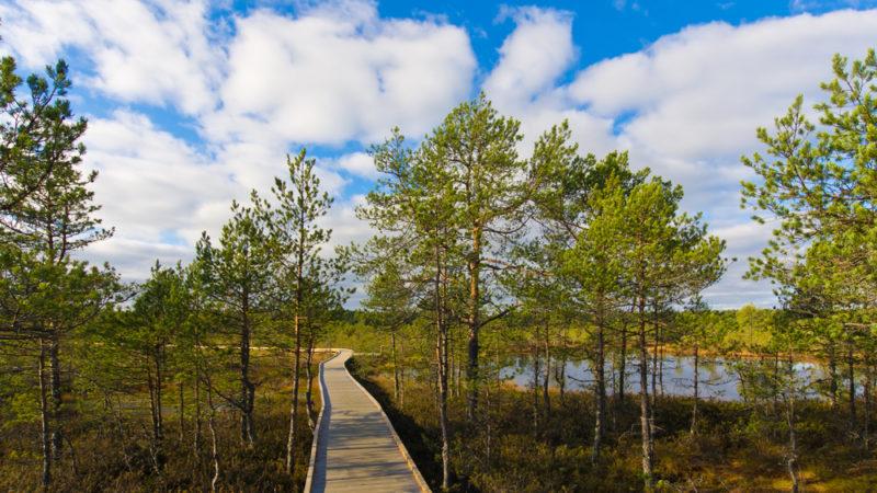 Lahemaa National Park Estonia