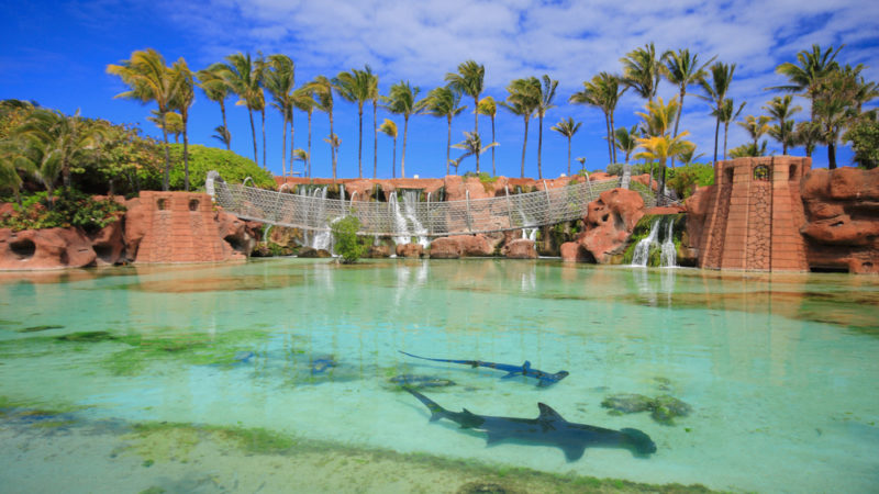 Sharks Atlantis resort