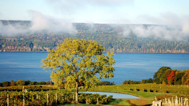 Vineyard Finger Lakes New York