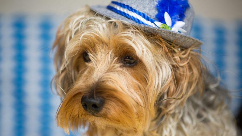 dog at octoberfest