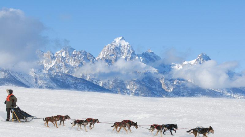 Iditarod Trail Dog Sled race