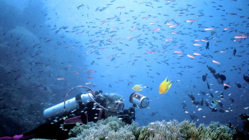 Beqa Lagoon fiji
