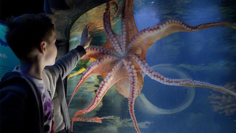 Photo by: Kelly Tarlton's Sea Life Aquarium