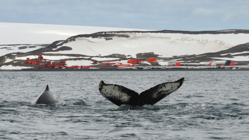 Whale Watching antarctica