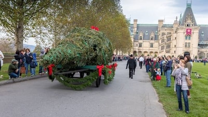 The 35-foot Fraser fir arrives on a horse-drawn carriage. Photo Credit: The Biltmore Company.