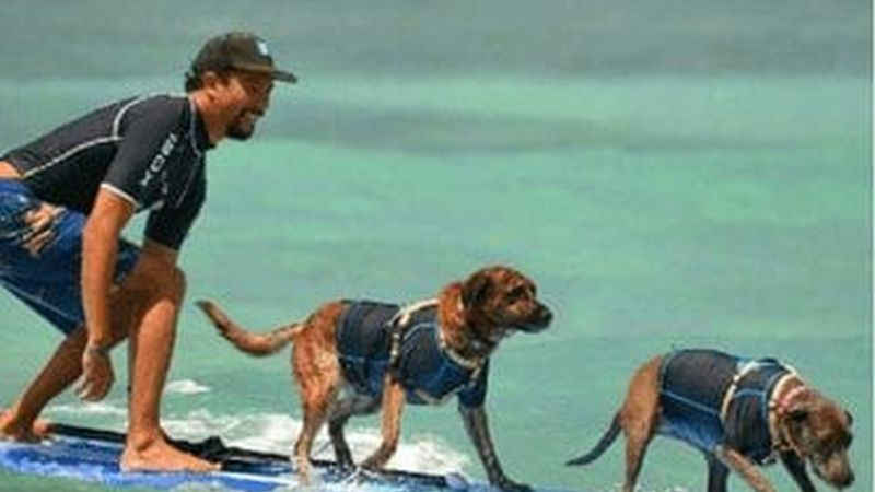 Photo courtesy of Hawaii Surf Dogs