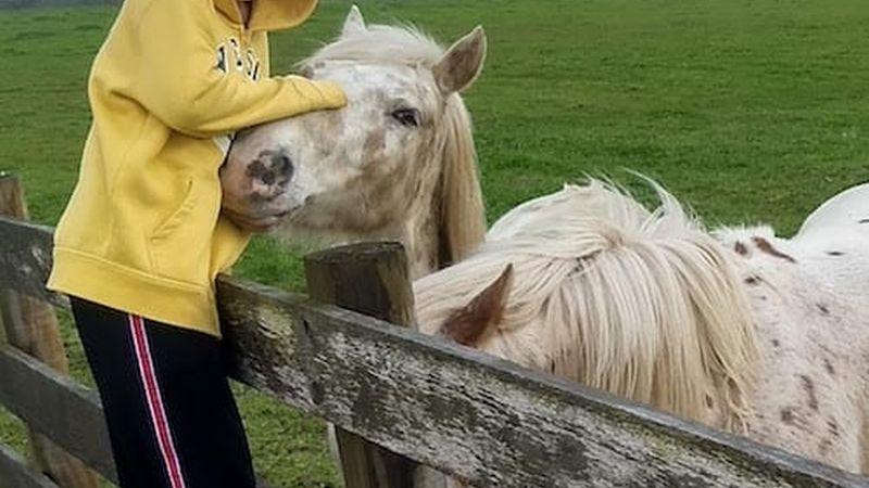 Horse at StarHill Farms