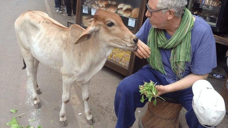 Ben and his favorite calf in Vietnam