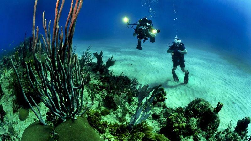 Diving in Cayman Islands