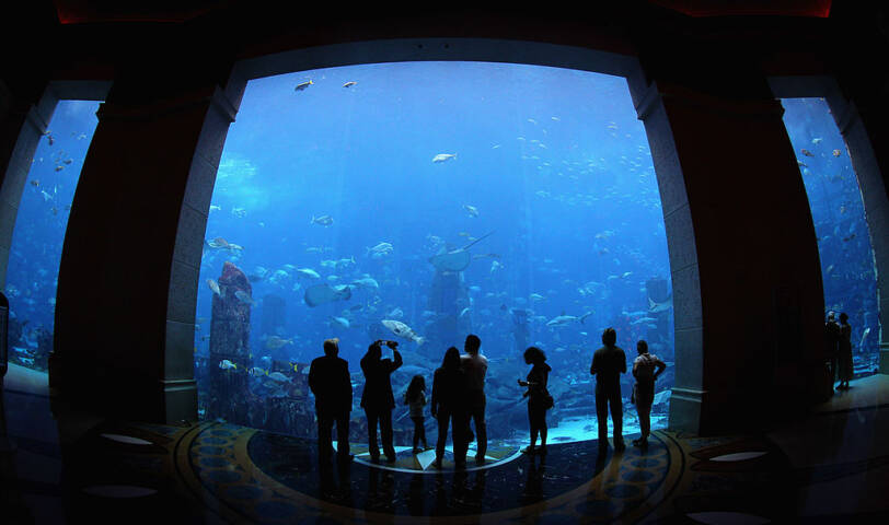 The 11-million litre aquarium contains over 65,000 fish, stingrays and other sea creatures.
