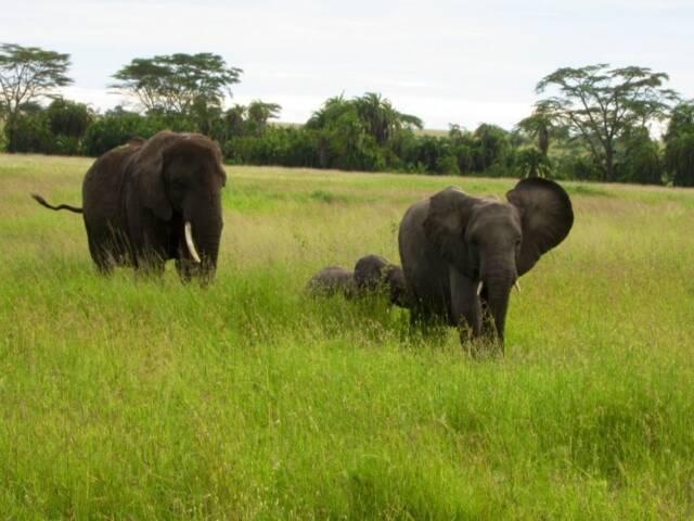 Wildlife in Peril in Thailand