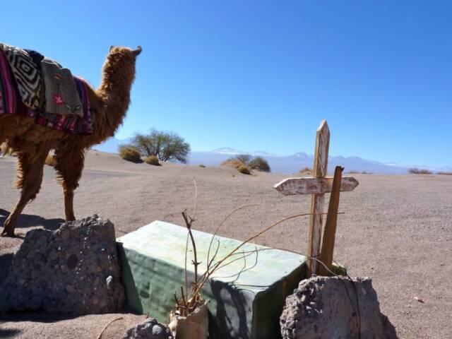 Chile: Life in the Atacama Desert