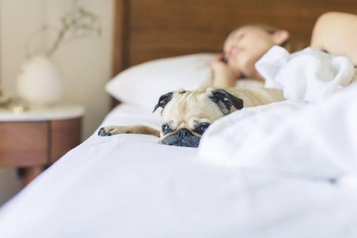 12 Days of Giving: The Gift of Sleep