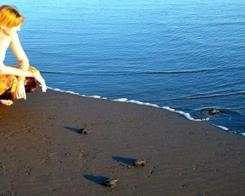 Sea Turtle Release in El Salvador