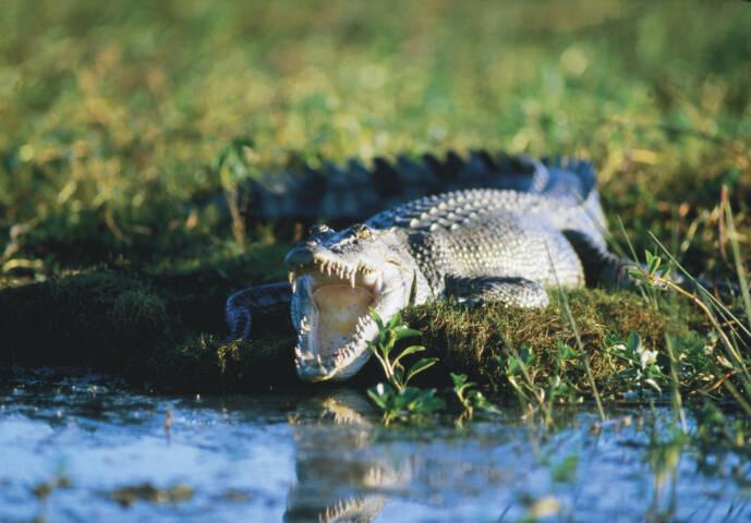 Gallery: Kakadu National Park