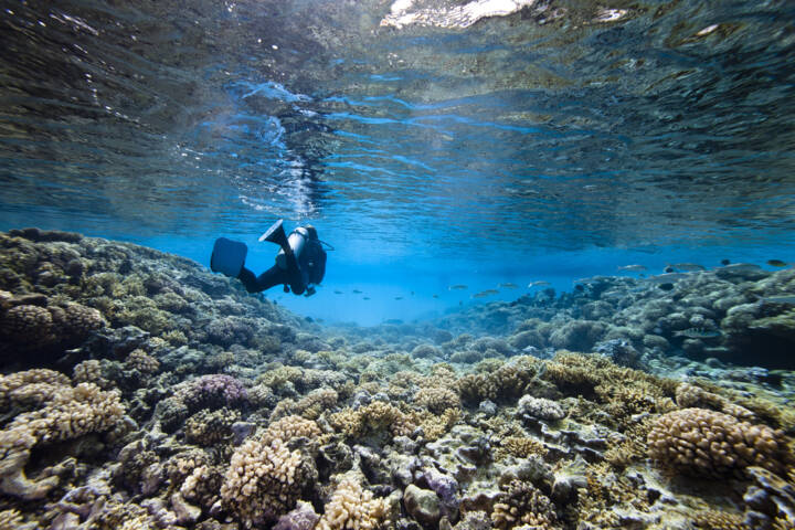The 10 Best Scuba Diving Locations in the World