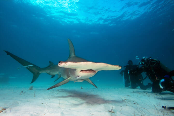 The 8 Best Places in the World to Swim with Sharks