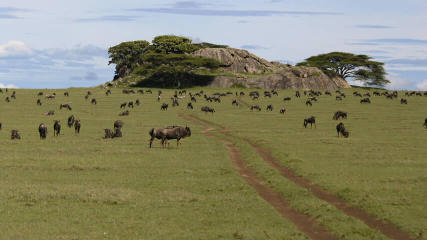 9 Things to See and Do in Serengeti National Park