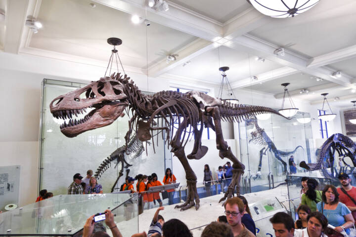 12 Best Museums to Walk Among Dinosaurs