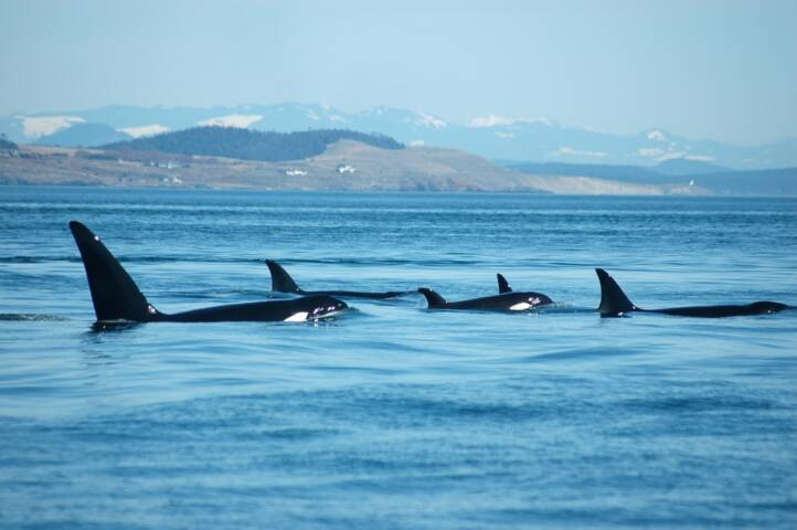 The World's 10 Best Whale-Watching Destinations