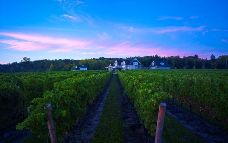 Off the Beaten Path: Best Small Wineries to Visit in Niagara